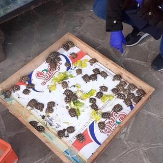 I carabinieri Forestali scoprono un allevamento illegale di tartarughe protette e sequestrano 145 esemplari