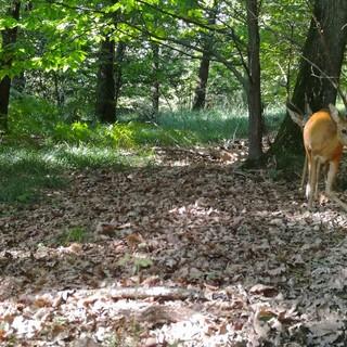 """Varese verso una stagione turistica """"green"""" fra trekking, percorsi in bici e riscoperta del bosco"""
