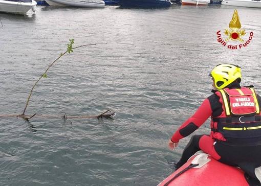 L'intervento in acqua dei vigili del fuoco sul lago Maggiore