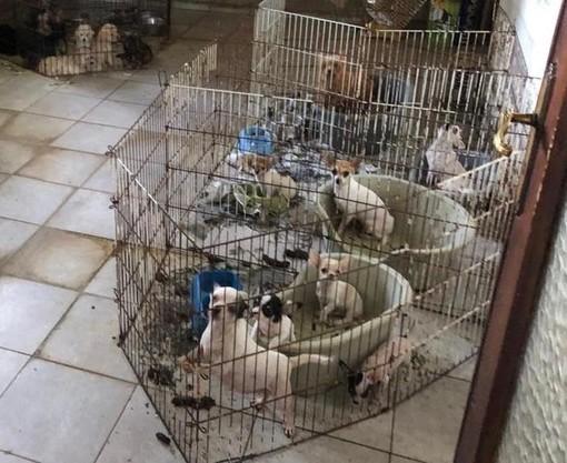 """L'Arpa scopre nel Pavese un """"allevamento lager"""" di cani, gatti e altri animali"""