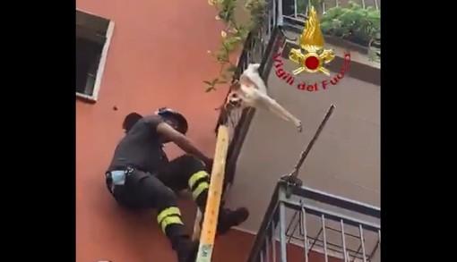 VIDEO. Cagnolino incastrato a testa in giù nelle inferriate del balcone ai piani alti viene salvato dai vigili del fuoco