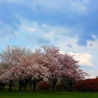 Botta e risposta a Casciago tra la minoranza e il sindaco sulla realizzazione del parco di Morosolo