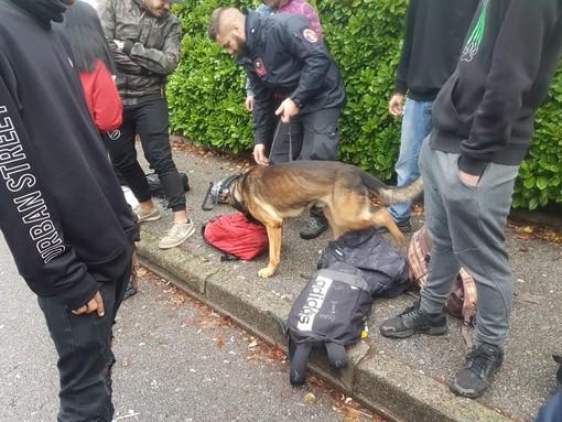 Cani anti droga in azione davanti alle scuole di Busto: due studenti trovati con la marijuana