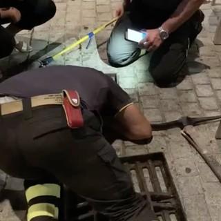 VIDEO. Il telefono cellulare finisce nel tombino... per recuperarlo servono i vigili del fuoco