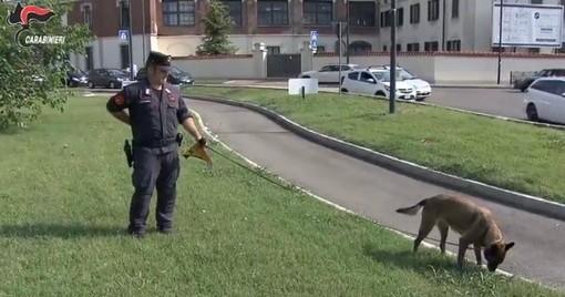 """Esche avvelenate contro cani e gatti. Per scoprirle entra in azione Puma, il """"cane carabiniere"""""""