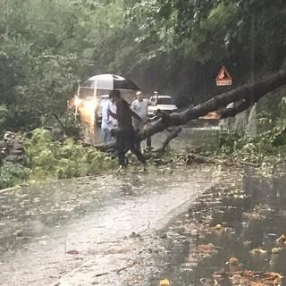 FOTO. Anche Varese sotto il nubifragio: caduto un albero sulla strada del Sacro Monte