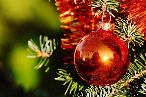 L'albero di Natale più verde? E' a chilometro zero e salva la montagna dall'abbandono