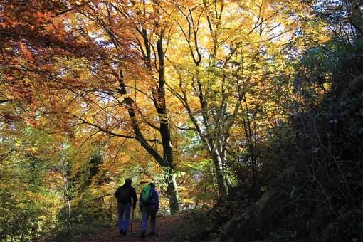 Giornata dell'Albero, da Regione Lombardia 500mila euro per la creazione di nuovi boschi