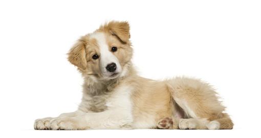 Con i corsi di pet-Therapy l'amore per gli animali diventa un lavoro