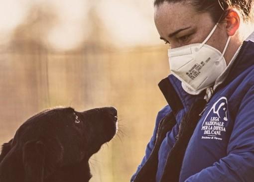 Il nuovo canile di Varese diventa un caso nazionale: «Quel bando mette in pericolo gli animali»