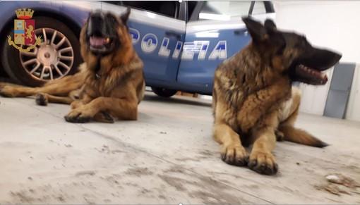FOTO. I poliziotti della Volante salvano due pastori tedeschi abbandonati in strada