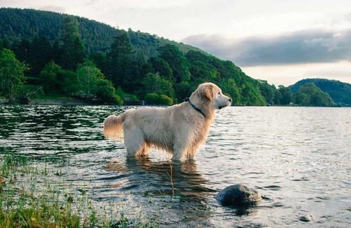Attenzione alle alghe tossiche nei laghi: possono essere pericolose per i nostri cani