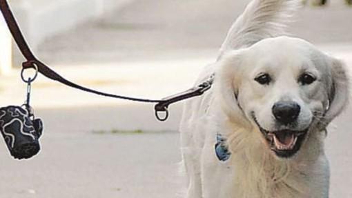 Parchi vietati a Fido a Viggiù, la sindaca fa chiarezza: «Siamo sensibili alle esigenze dei cani»
