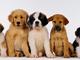 """Ats Insubria: arriva il """"Patentino 2020"""" per i proprietari dei cani"""
