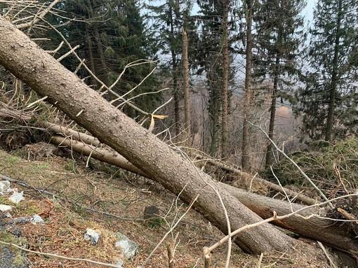 Campo dei Fiori, Cattaneo: «Stanziati 3,6 milioni per riforestare e per la tutela della biodiversità»