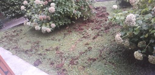 Alcuni dei danni provocati dai cinghiali questa notte ad Avigno