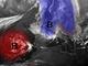 L'immagine satellitare pubblicata dal Centro Geofisico Prealpino