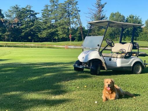 Giocare a golf con il proprio cane in provincia di Varese: possibile o impossibile?