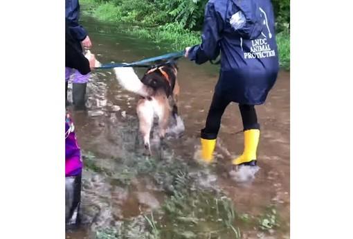 Canile ancora sott'acqua, l'appello della Lega del Cane: «Aiutateci a farci spostare»