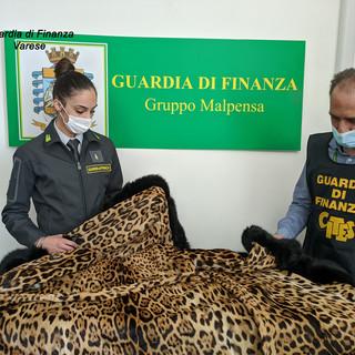 Coralli, borsa in alligatore del Mississipi e pelliccia di giaguaro. A Malpensa scatta il sequestro