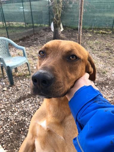 Staffette di cani dal Sud Italia fino a Varese, la denuncia della Lega del Cane
