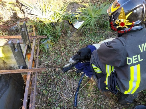 Cane cade in una vasca di acqua gelida: Thiago salvato dai vigili del fuoco