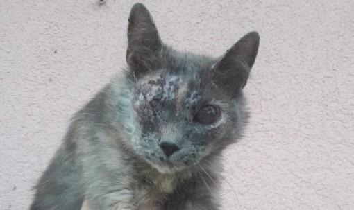 Ancora violenza sugli animali: la gattina Trilly presa a fucilate