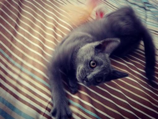 Coronavirus nei gatti? Il veterinario: «Ha la stessa forma del nostro, ma non è contagioso»