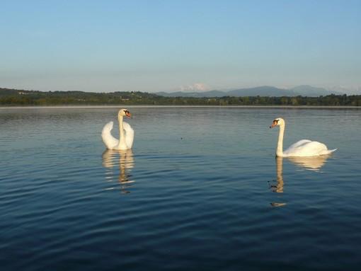 La vita sul lago di Varese (foto Mario Chiodetti)