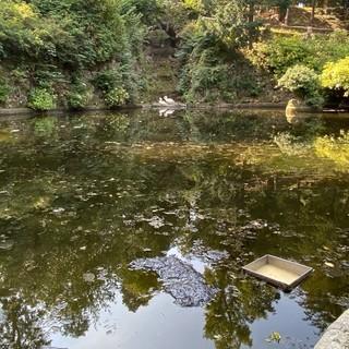 FOTO. «Topi ed escrementi nel laghetto dei cigni», lo stupore dei visitatori ai Giardini Estensi