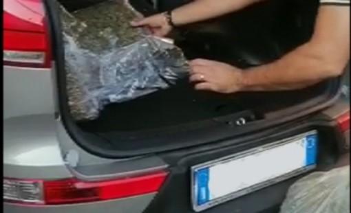 Cantello, un quintale di marijuana nascosto nel doppio fondo di un furgone