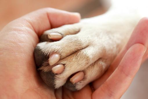 Cani e padroni insieme per sempre. La Lombardia verso la legge per la tumulazione comune