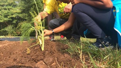 Giovani e ambiente, al via il corso gratuito per realizzare un orto sinergico