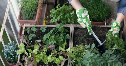 Boom di orti fai da te sul balcone di casa: 6 cittadini su 10 in provincia coltivano piccoli ortaggi ed erbe aromatiche tra piante e fiori