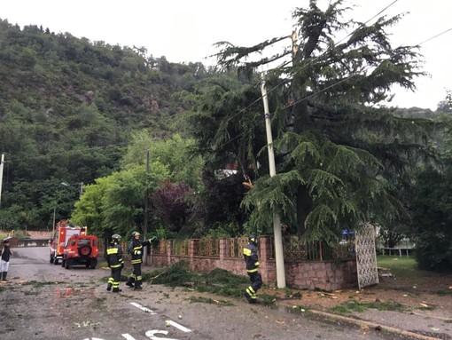 L'albero colpito da un fulmine a Porto Ceresio e i vigili del fuoco in azione (dal profilo Facebook di Marco Prestifilippo)