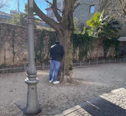 """Ore 14, pieno centro di Varese: se scappa, scappa... e così un uomo si """"libera"""" di un peso nel viale alberato di via Dandolo"""