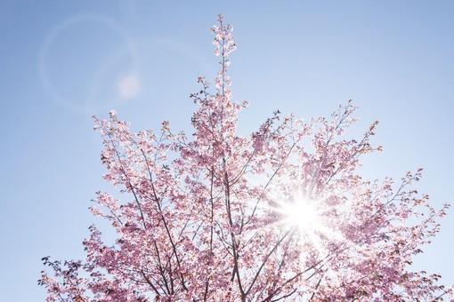 Sole anche a Pasquetta con massime tra 17 e 18 gradi. La pioggia? Era un pesce d'aprile