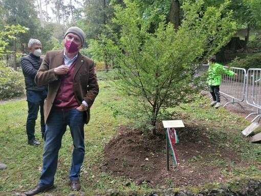 """VIDEO. Piantato ai Giardini """"l'albero della neve"""" dedicato a Franco Armino"""