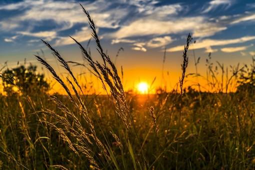 Svuotamento fosse biologiche in estate: come procedere?