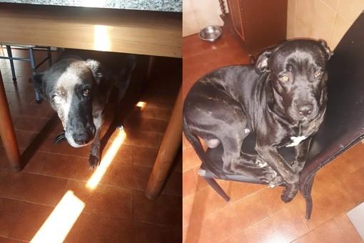 """LA STORIA. Appello per Spillo e Corso, i due cani rimasti """"orfani"""" ora cercano casa insieme"""