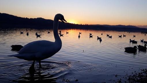 FOTOGALLERY. L'intimità e la bellezza assolute di un tramonto alla Schiranna