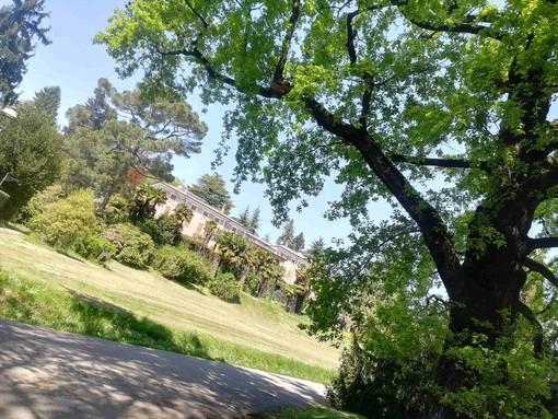Ristrutturazione Villa Mylius, i lavori preoccupano il vice sindaco: «Massima attenzione al patrimonio arboreo»