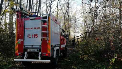 Alberi caduti sul sentiero del Porticciolo, vigili del fuoco in azione