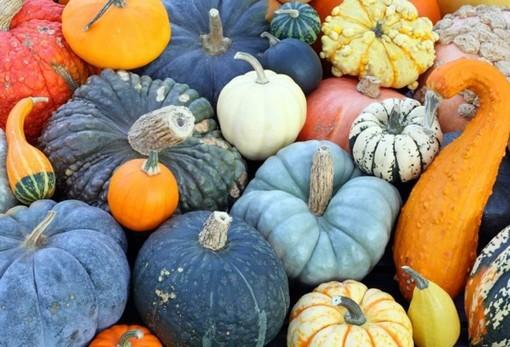 Halloween, zucca protagonista in tavola: «Memoria, curiosità e i consigli per prepararla»